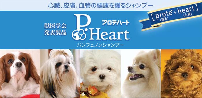 パンフェノンシャンプー 心臓、皮膚、血管の健康を護るシャンプー